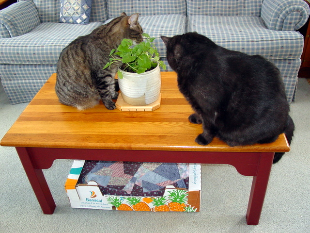 Cats with catnip