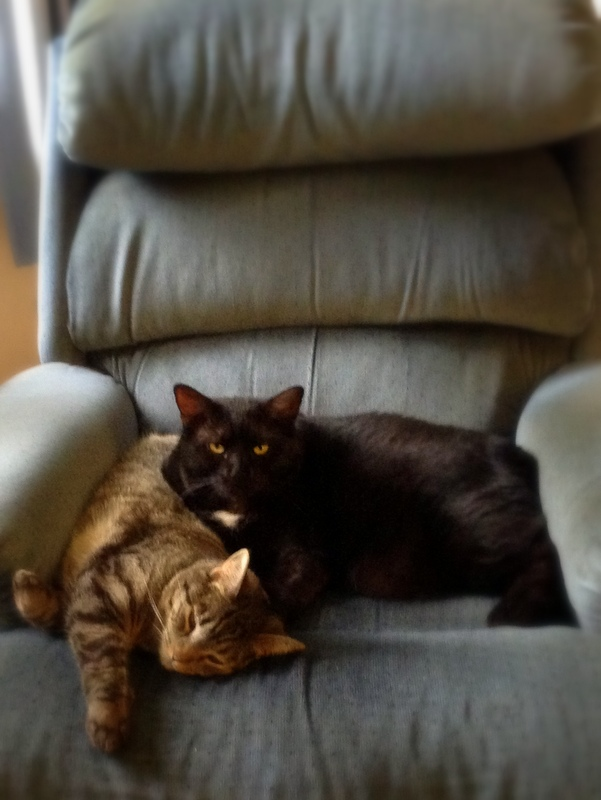 brotherly love - cats
